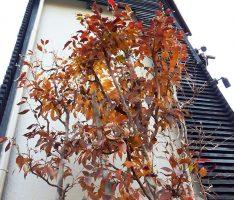 植木の背景と木部のコントラスト